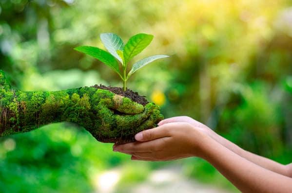 Représentation de l'écologie