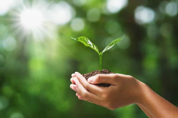 la nature dans la main
